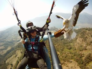 Paragliding Eagles